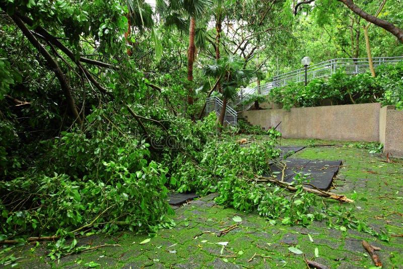 Garten beschädigt durch Taifun stockfotos