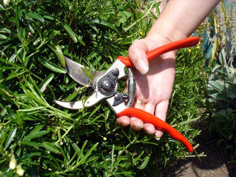 Garten-Beschneidung lizenzfreie stockbilder