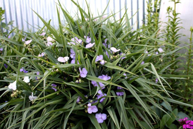 Garten Blühende Gartenpflanzen Blumen stockfotos