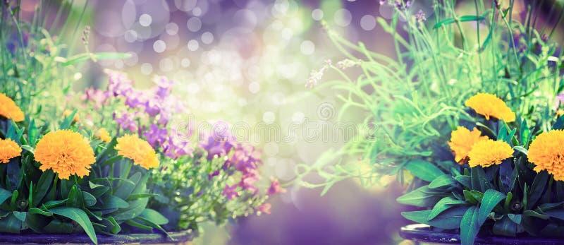 Garten blüht auf unscharfem Garten- oder Parkhintergrund, Fahne für Website stock abbildung