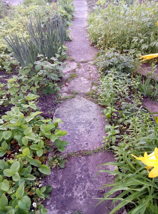 Garten blüht Sommer des grünen Grases stockfotografie