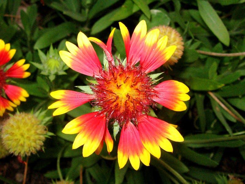 Garten-Blume lizenzfreie stockfotos