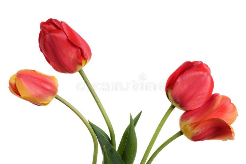 Garten-Blumenblumenstrauß von den Tulpen Lokalisierung auf einem weißen Hintergrund lizenzfreie stockbilder