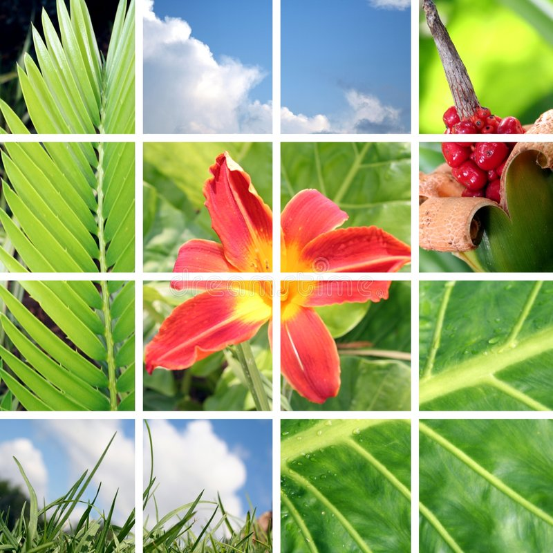 Garten-Collage stockfotos