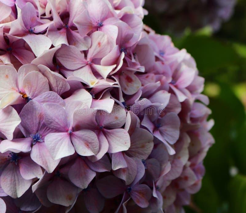 Garten der Blumen lizenzfreies stockfoto