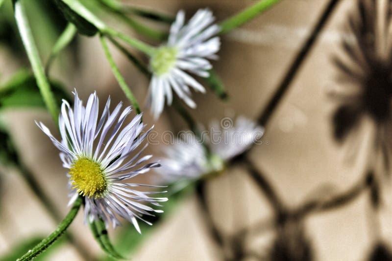 Garten der weißen Blume lizenzfreies stockbild