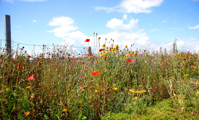 Garten der wilden Blumen   lizenzfreie stockbilder