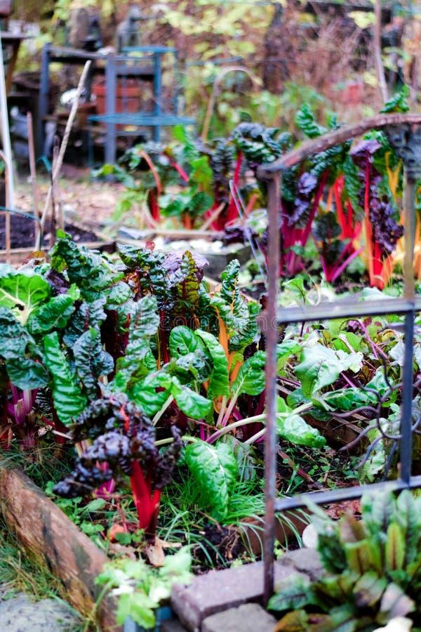 Garten des verborgenen Geheimnisses im Herbst stockfotografie
