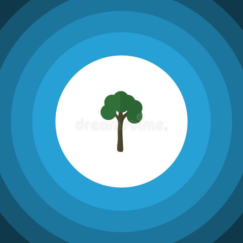Garten-flache Ikone Immergrünes Vektor-Element kann für Immergrün, Baum, Bauholz-Konzept des Entwurfes benutzt werden vektor abbildung