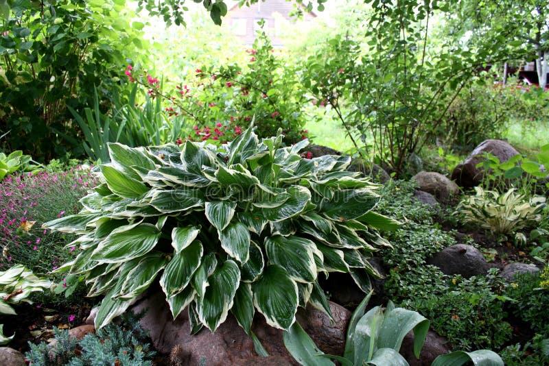 Garten Gartenlandschaft Schöne Felder des Pfingstrosengartens von Ranunculus gewachsen im Süden lilien stockbilder