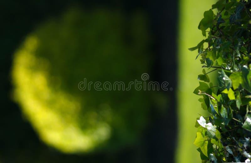 Garten-Hintergrund stockbild