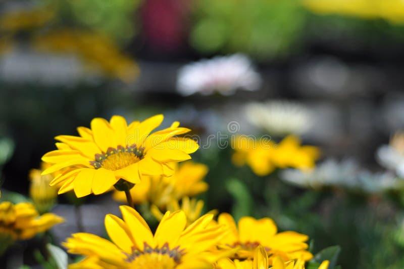 Garten-Kindertagesstätten-Blumen lizenzfreie stockfotografie