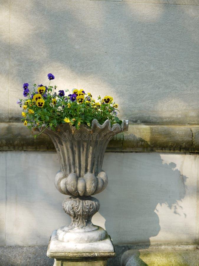 Garten: klassische Urne mit Pansies stockbild
