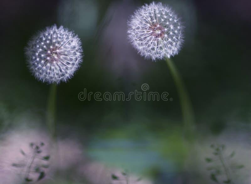 Garten meines Schätzchens lizenzfreies stockbild