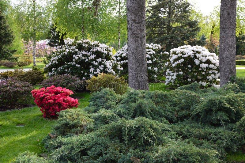 Garten mit Blumen und Sträuchen stockfotografie
