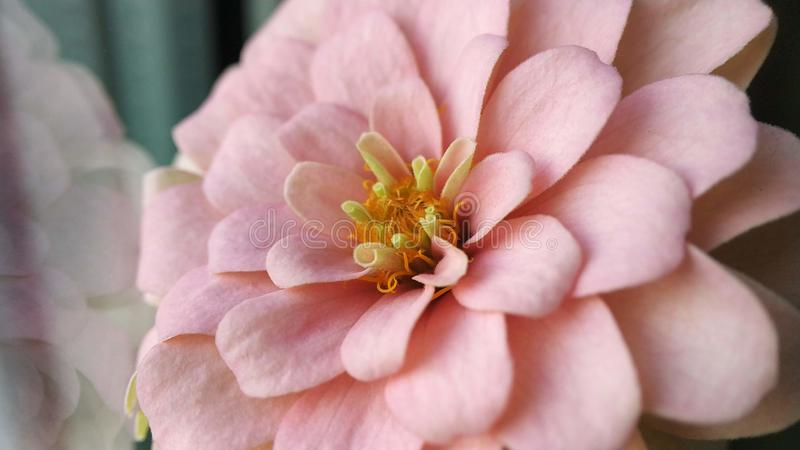 Garten mit mehrfarbigen herrlichen Blumen Rosa, orange Farbe stockfoto