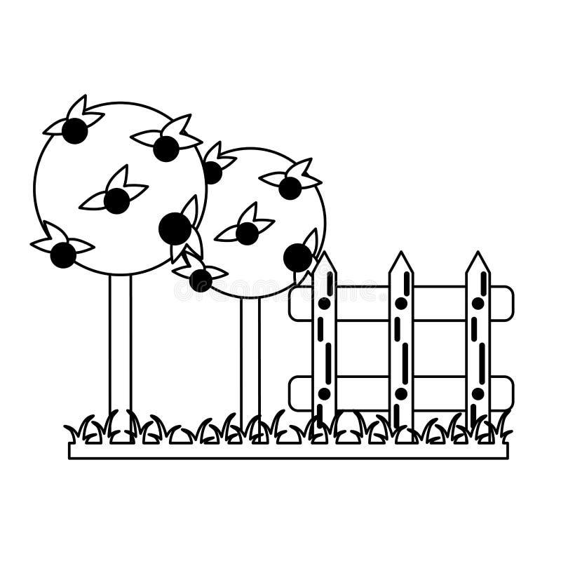 Garten mit Orangenbäumen und Zaun Schwarzweiss vektor abbildung