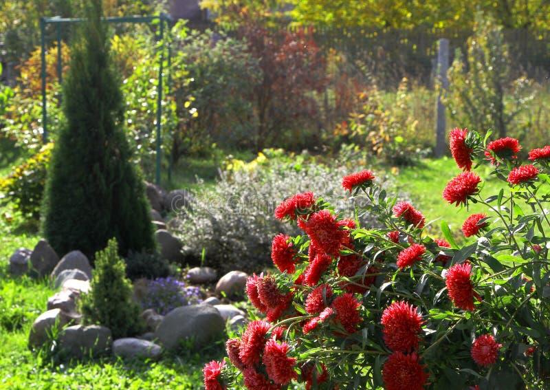 Garten mit roten Blumen und Baum lizenzfreie stockbilder