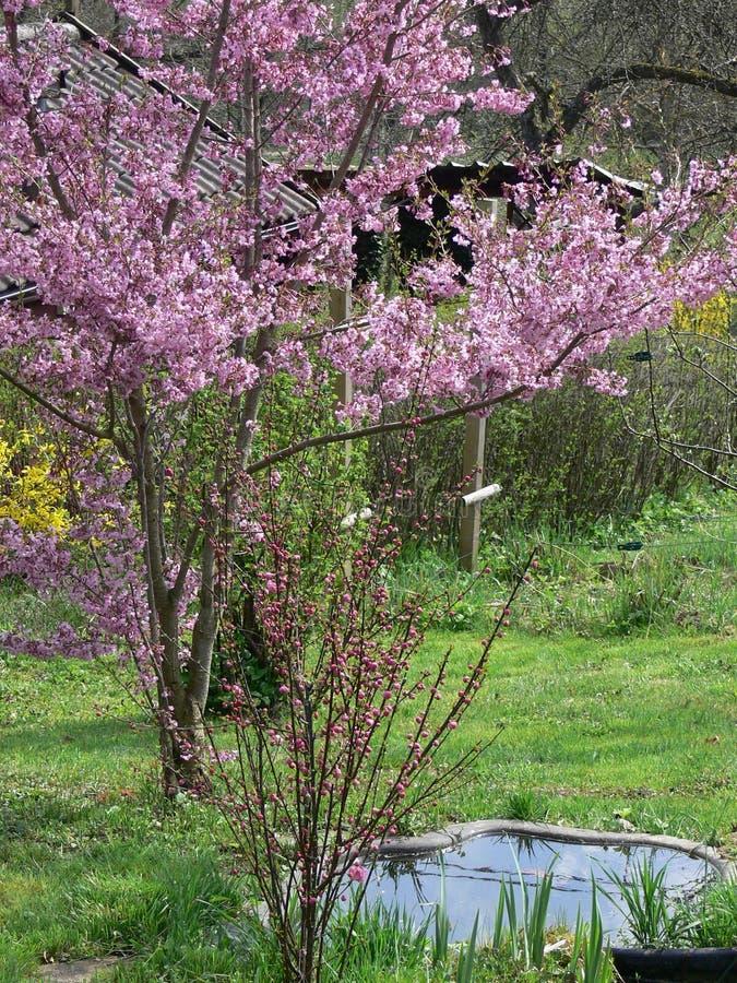 Garten mit Teich und blühendem Baum stockfoto