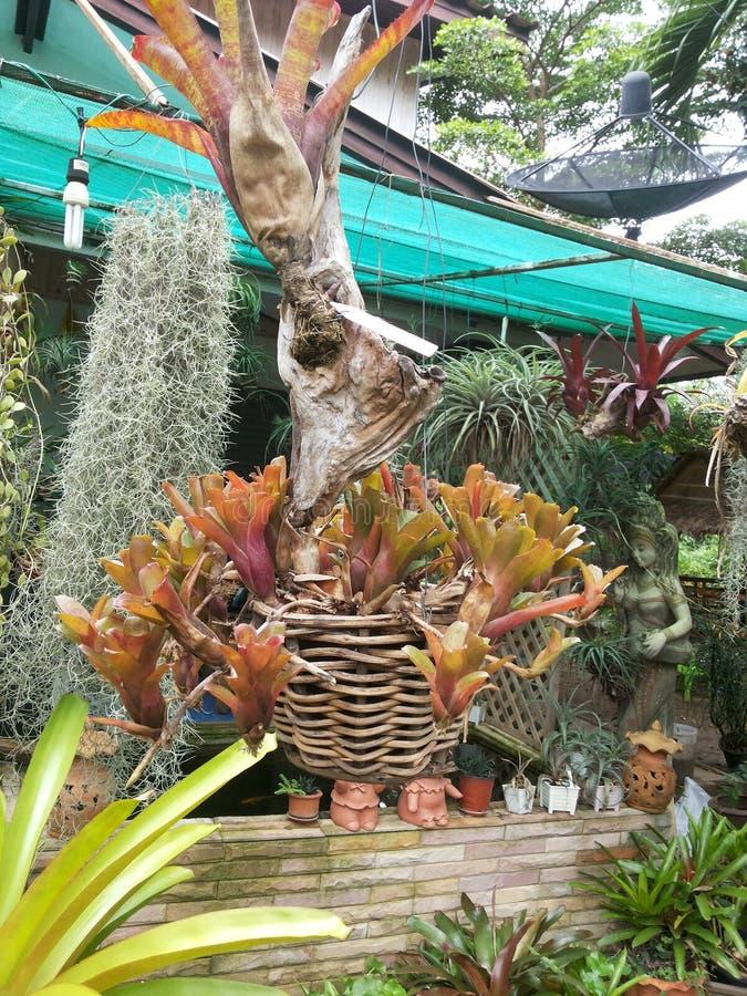 Garten nett stockfotografie