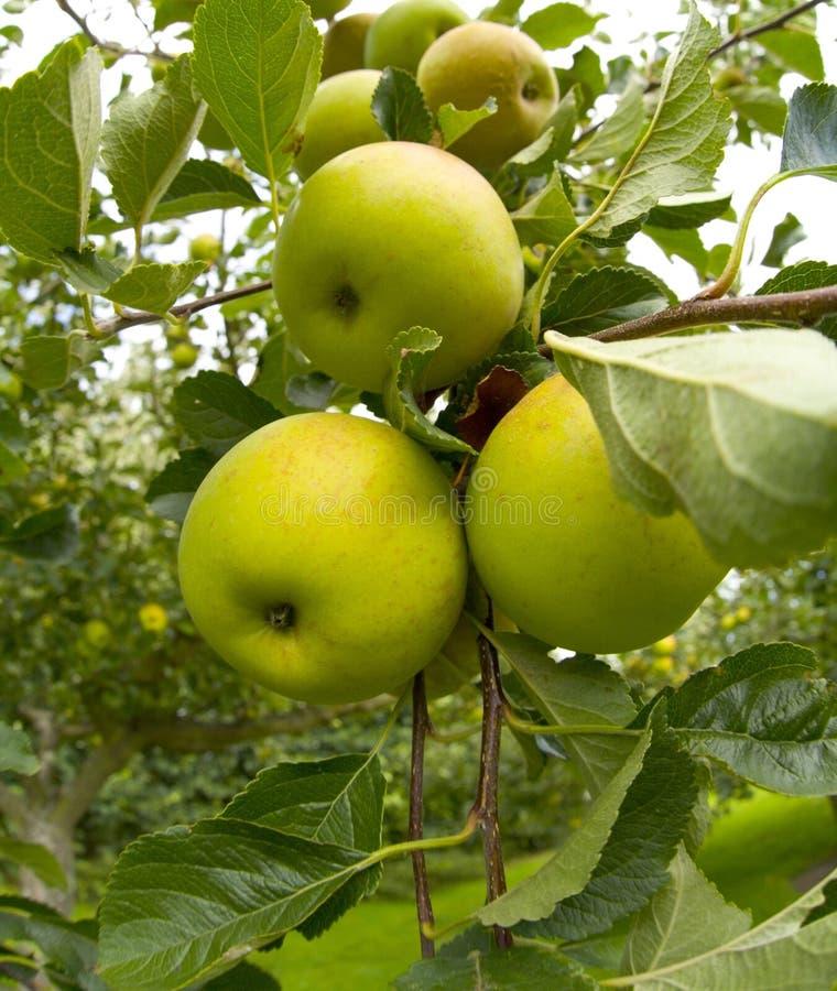 Garten organische ryton ryton Gärten Warwickshire Midlands England stockfotografie