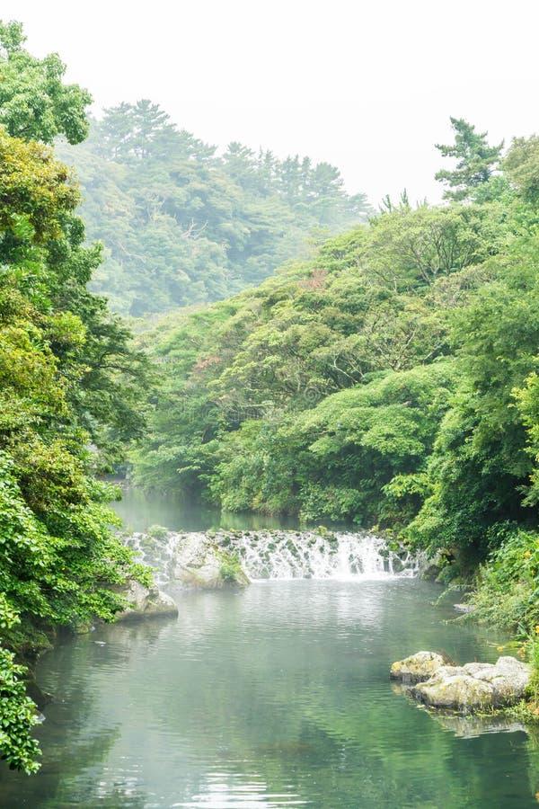 Garten-Park an Cheonjiyeon-Wasserfällen in Jeju-Insel stockfotos