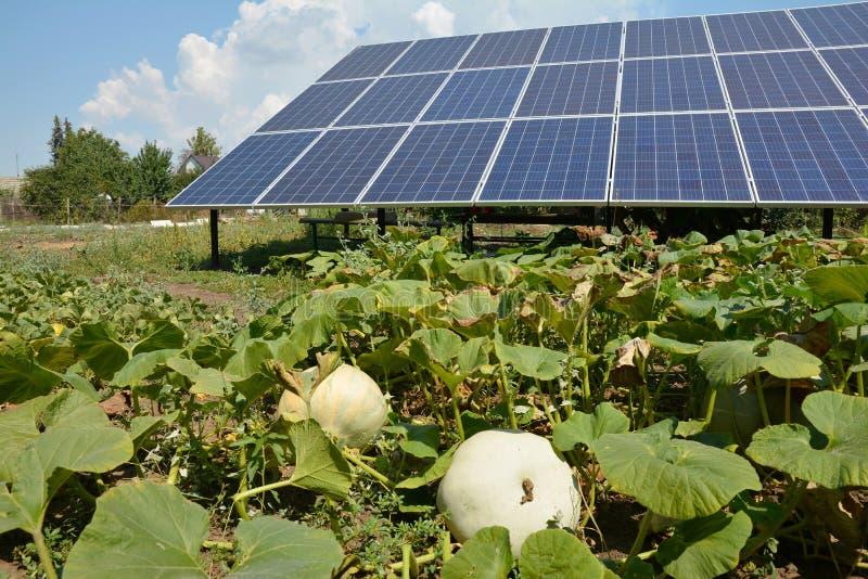 Garten-Sonnenkollektoren mit wachsenden Kürbisen Verwenden Sie Solarenergie, Sonnenkollektoren in Ihrem Garten lizenzfreie stockfotografie