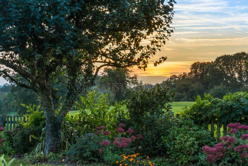 Garten-Sonnenuntergang stockfotografie