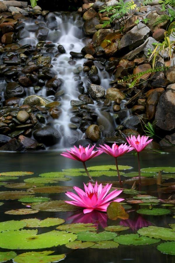 Garten und Wasserfall stockfotos