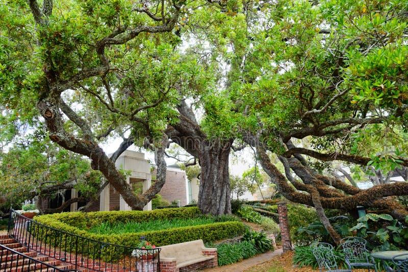 Garten von Cummer-Museum in Jacksonville, Florida stockbilder