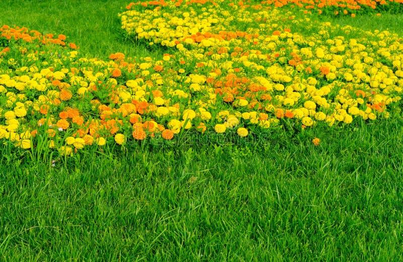 Garten von Ringelblume Calendula stockbilder