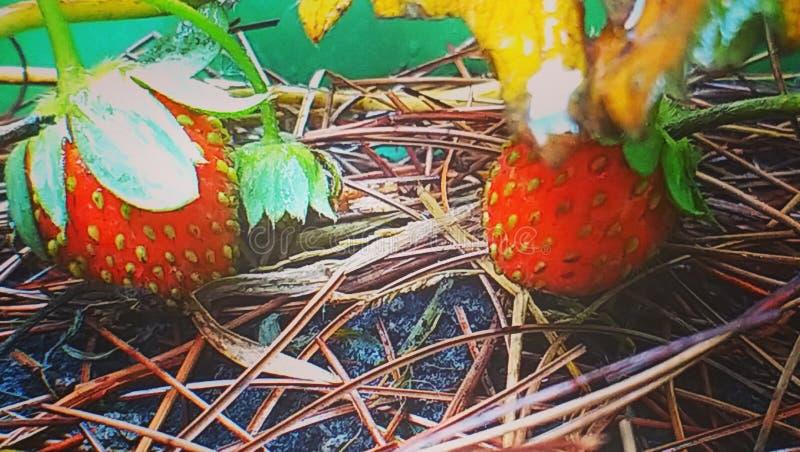 Gartenarbeit stockbilder