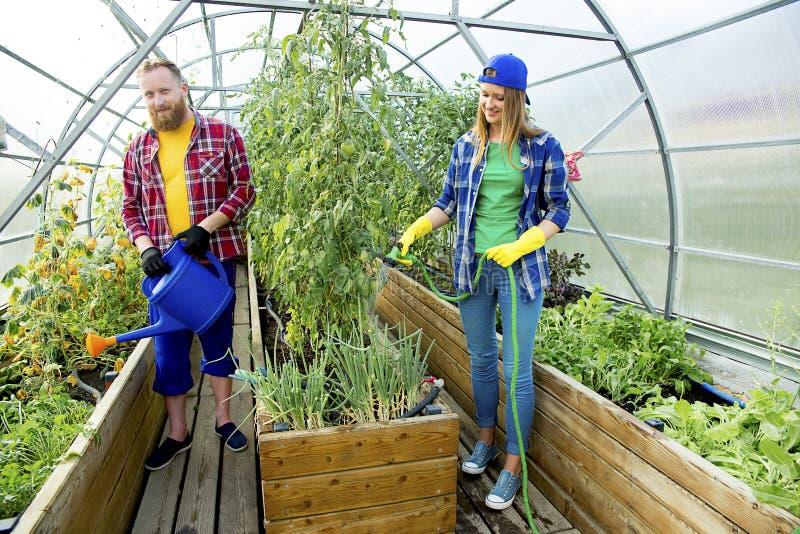 Gartenarbeit des glücklichen Paars stockfotos