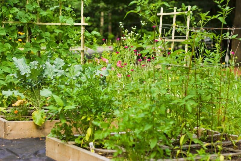 Gartenarbeit durch den Quadratfuß lizenzfreie stockfotografie