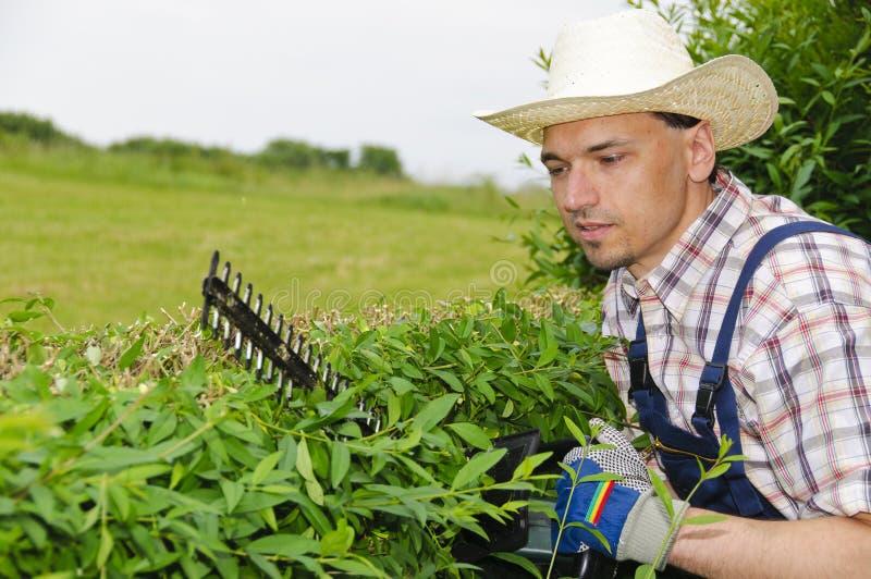 Gartenarbeit, Hecke schneiden lizenzfreies stockfoto