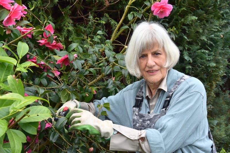 Gartenarbeit, Hobby einer älteren Frau lizenzfreie stockfotografie
