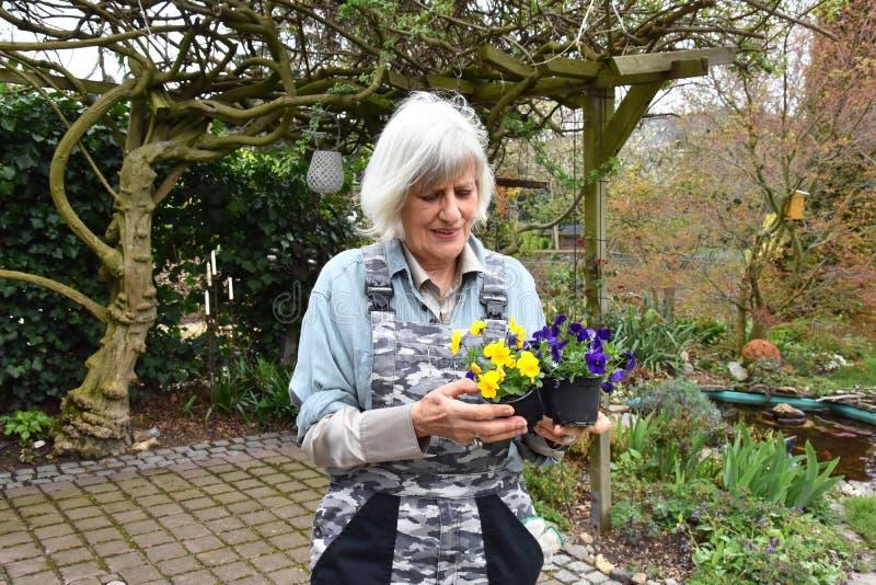 Gartenarbeit, Hobby einer älteren Frau lizenzfreie stockfotos