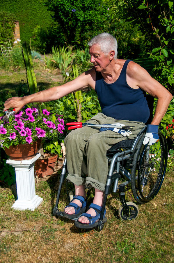 Gartenarbeit im Rollstuhl stockbilder