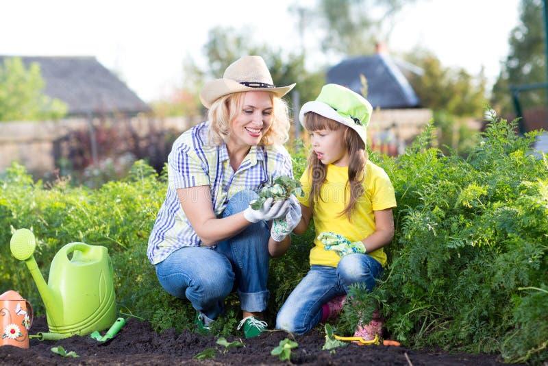 Gartenarbeit, pflanzend - Mutter mit Kinderbetriebserdbeersämlingen in Gartenbett lizenzfreies stockfoto
