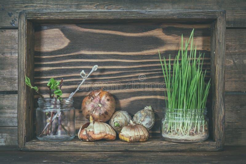 Gartenarbeit und Konzept pflanzend Sämlinge, Gartenwerkzeuge, Knollen stockfotos