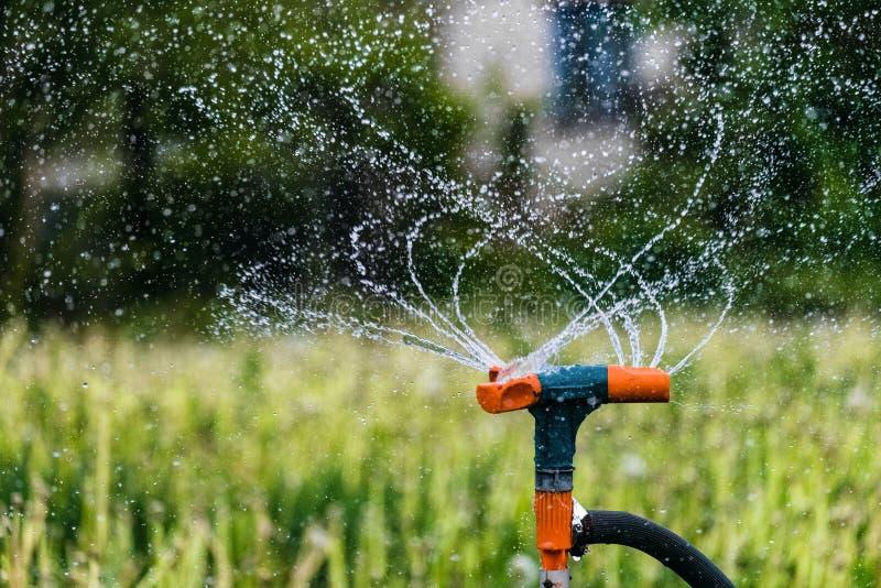 Gartenarbeitbewässerungssystem, das Grünpflanzen wässert Rotationsberieselungsanlagen- und Spritzenwassertropfen stockfotos