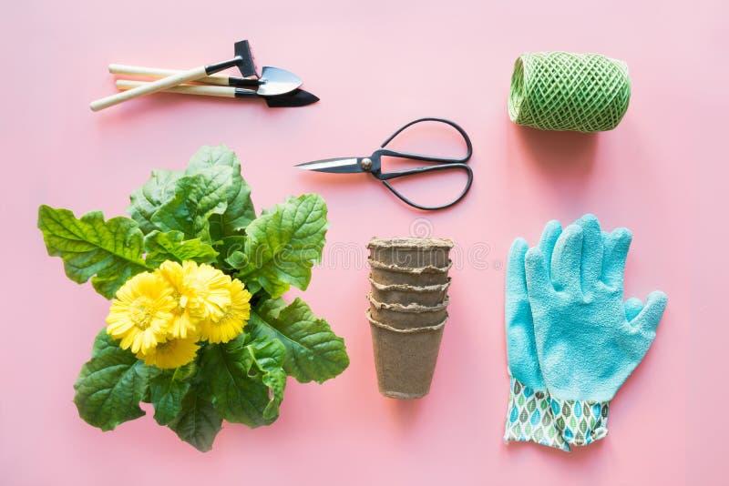 Gartenarbeithintergrund mit Gerbera, Werkzeugen und Blumen auf Rosa Beschneidungspfad eingeschlossen Kopieren Sie Platz stockfotos
