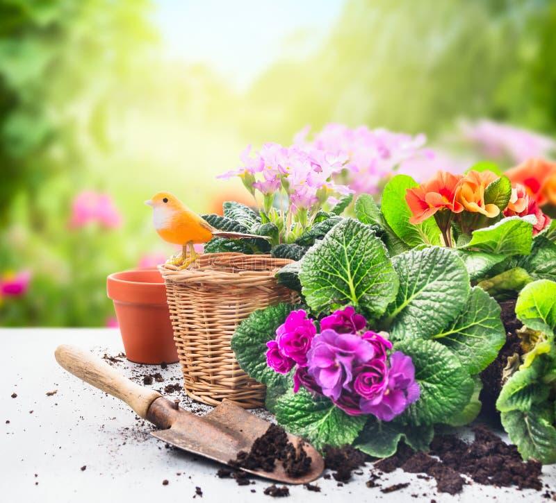 Gartenarbeitsatz auf Tabelle mit Blumen, Töpfen, Pottingboden und Anlagen auf sonnigem Garten stockfoto