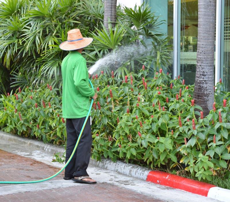 Gartenarbeitskraft sind, spritzend wässernd und Blumen und Bäume stockfotografie