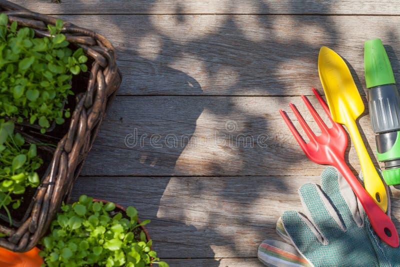 Gartenarbeitwerkzeuge und -sämling auf Gartentisch lizenzfreies stockfoto