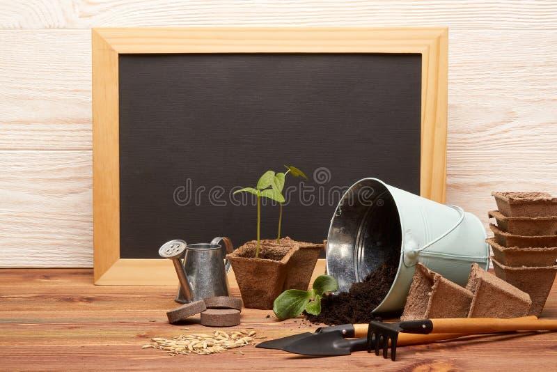 Gartenarbeitwerkzeuge und -sämlinge stockfotos