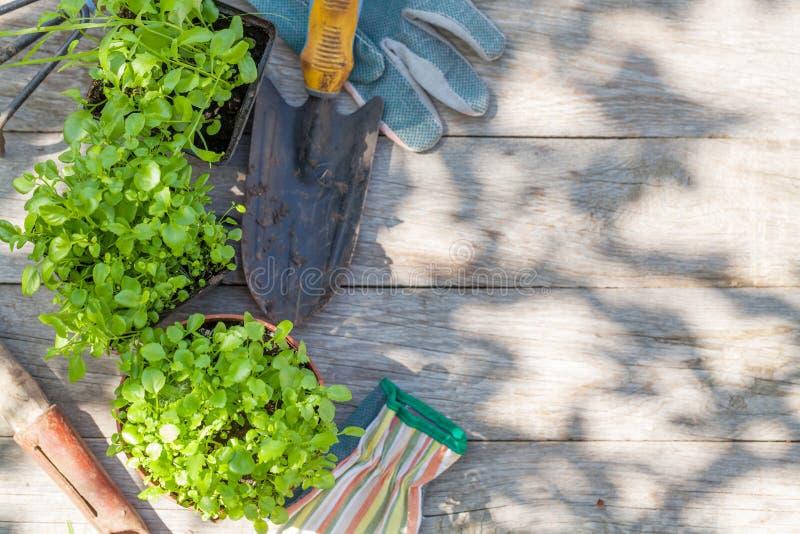 Gartenarbeitwerkzeuge und -sämlinge lizenzfreie stockfotos