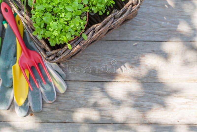 Gartenarbeitwerkzeuge und -sämlinge stockbild