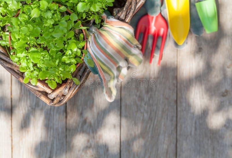 Gartenarbeitwerkzeuge und -sämlinge lizenzfreie stockfotografie