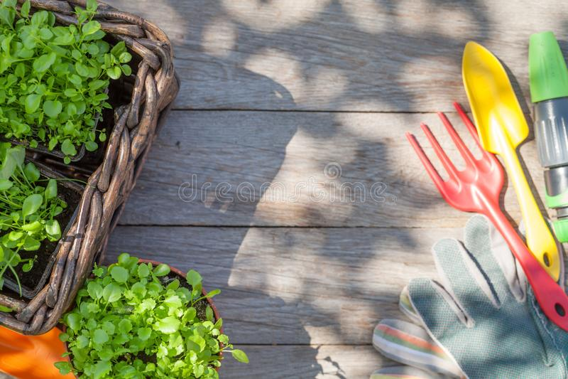 Gartenarbeitwerkzeuge und -sämlinge lizenzfreies stockfoto